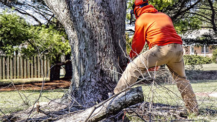 Whitwell Landscaping: Secrets of the Tree Care Industry