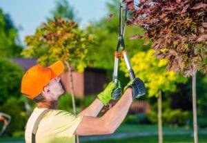 Suwanee Tree Services